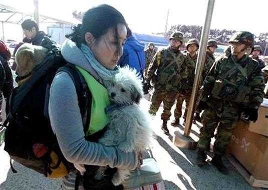 Corée: Condamnée pour avoir libéré des chiens... 30796010