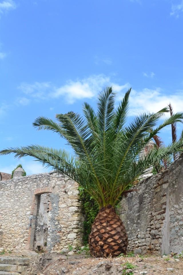 Mon carnet de voyage en Corse. Dsc_0621
