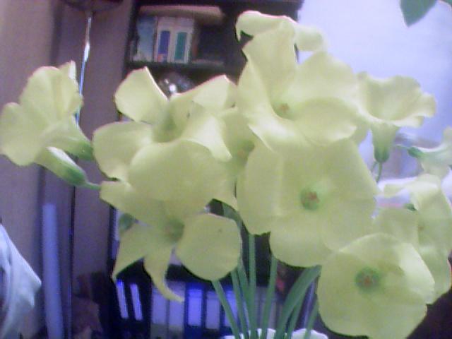 Floraisons de janvier - Page 2 Jeunet10
