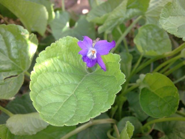 Floraisons de janvier Photo011
