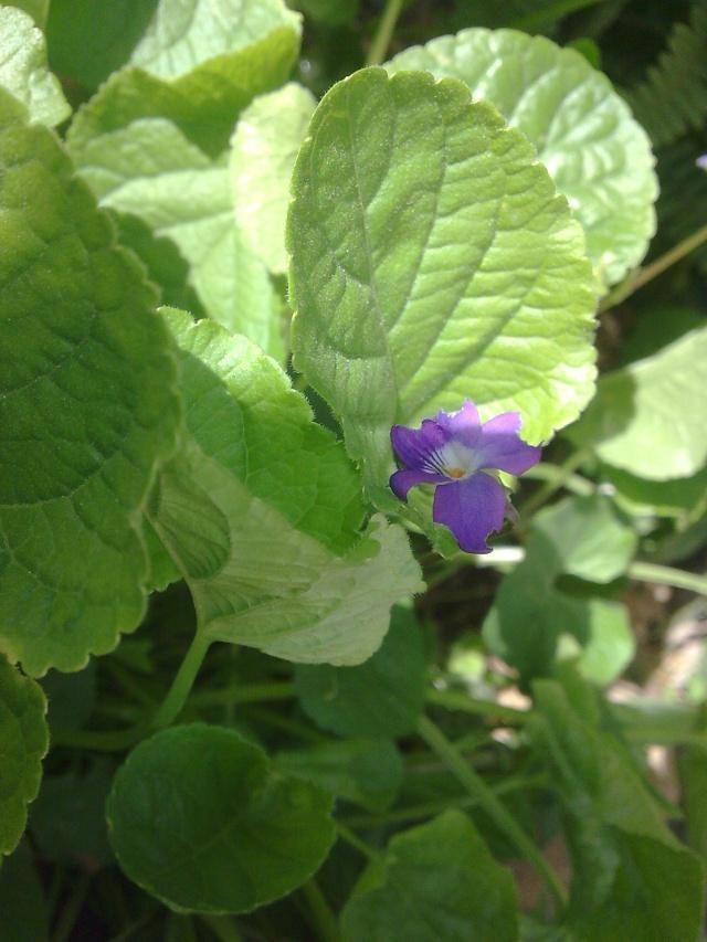 Floraisons de janvier Photo013