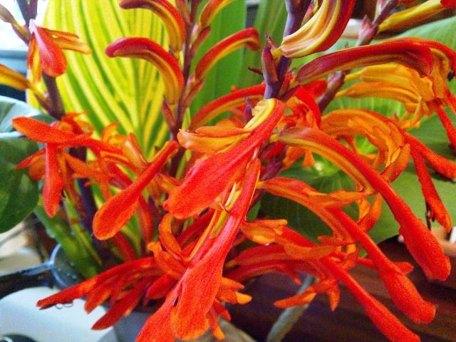 Floraisons de janvier - Page 3 Photo022
