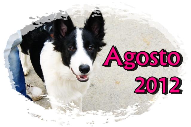 Amigos Caninos Dsc02611