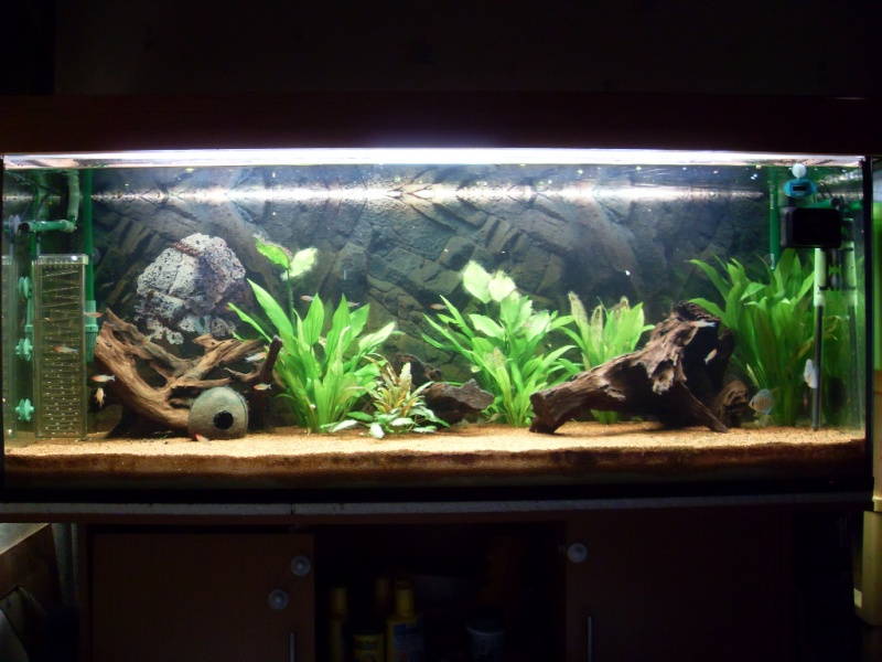 Aquarium 450l (Chris78fr) Sdc12410