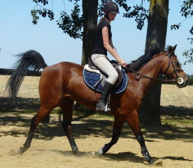 ♣ photos de vous à cheval Berto_10
