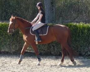 ♣ photos de vous à cheval P1060110