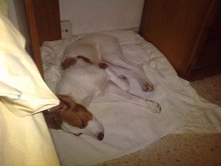 Cachorra de 4 meses Bicho_15