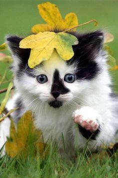 Concours de La plus belle photo animale Concou16