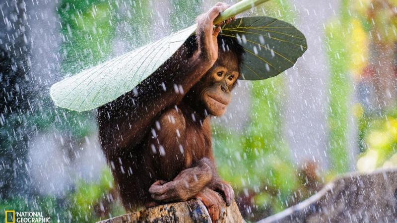Concours de La plus belle photo animale Concou19