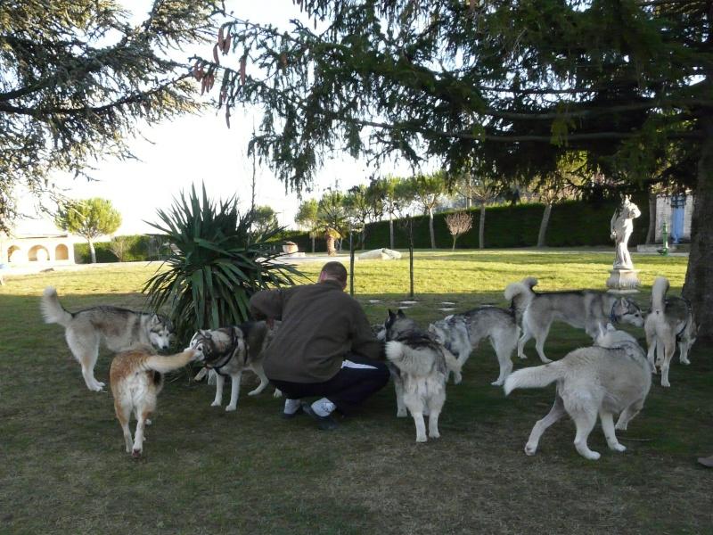 Sounde husky femelle de 7 ans ancienne maltraitée dpt 13 DECEDEE - Page 2 P1070815