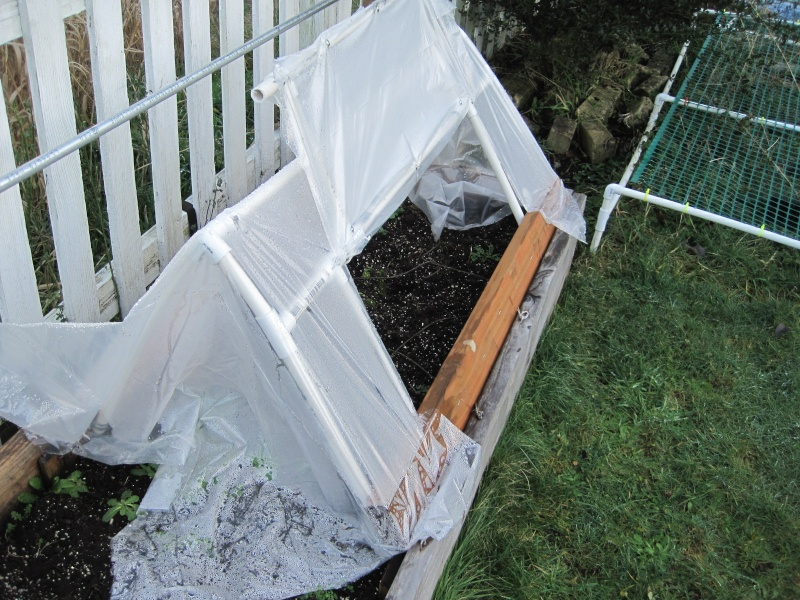Yet another Cold Frame Januar12