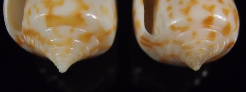 Cones a identifier, merci P7183912