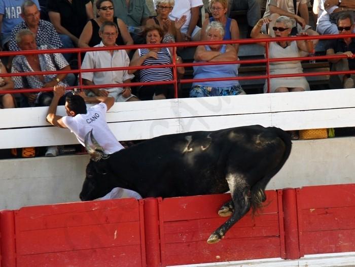 LANSARGUES - Concours de Manades-12-08-2012 Avenir13