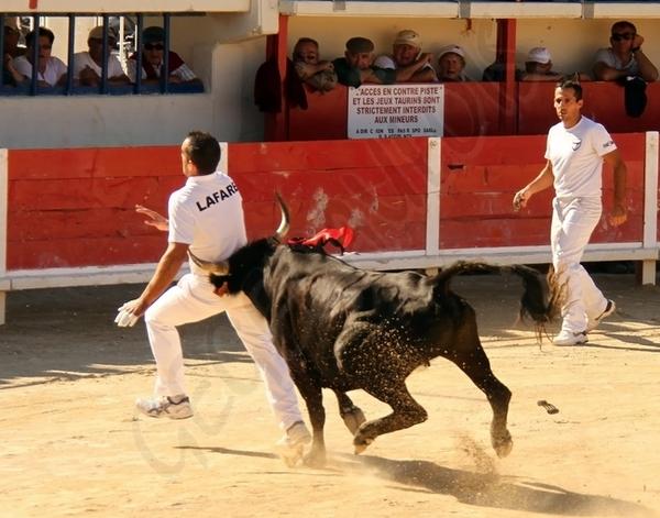 Finale des Vaches Cocardières Grau du Roi  15-09-2012 Finale15