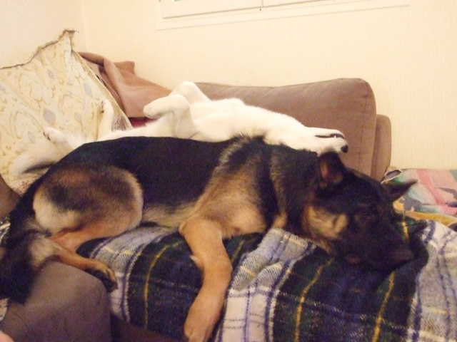 Les loulous qui dorment Fundy_48