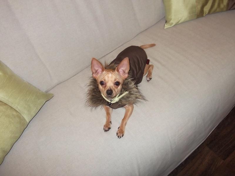 Paco et son nouveau manteau Paco_110