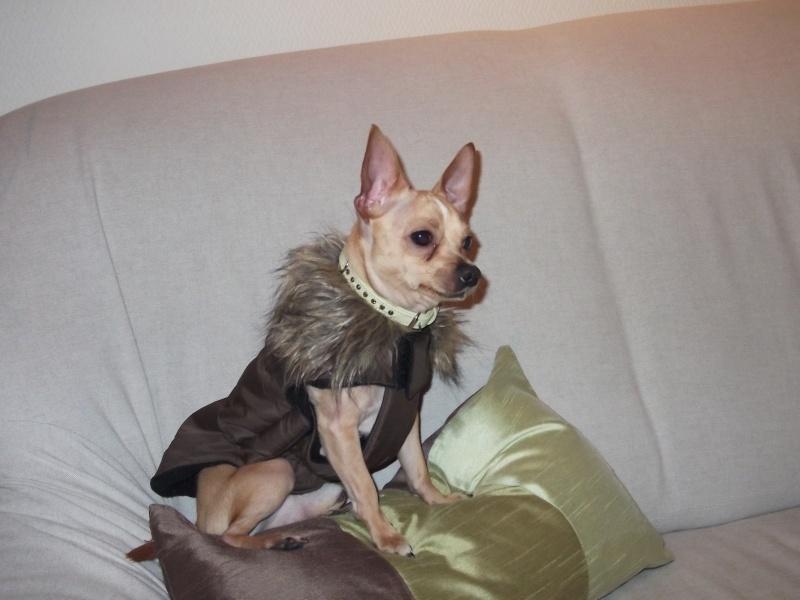 Paco et son nouveau manteau Paco_111