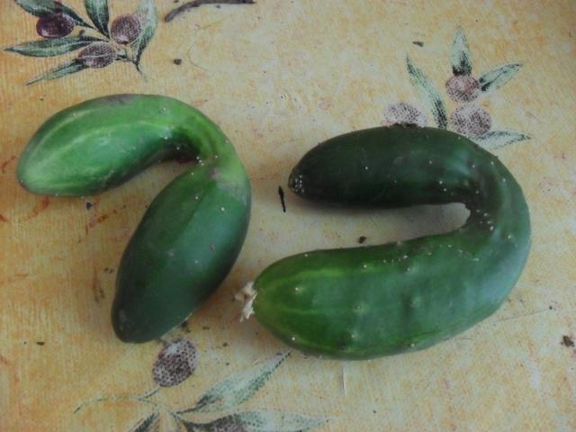 Légumes aux formes bizzares. 00218