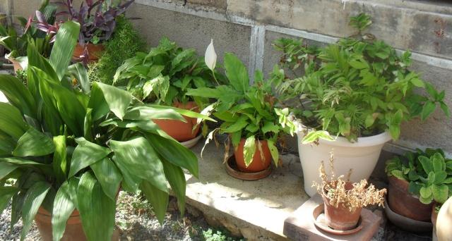 Identification d'une plante d'intérieur 0071210