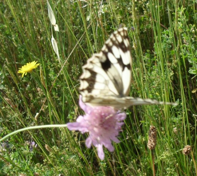 beau papillon 015_310