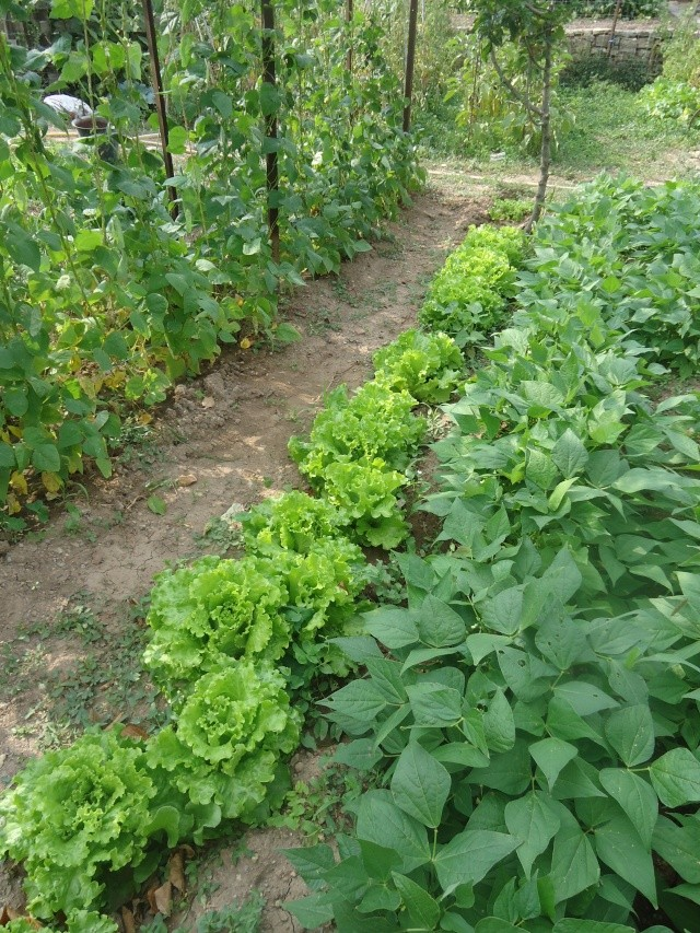 mes legumes - Page 5 06611