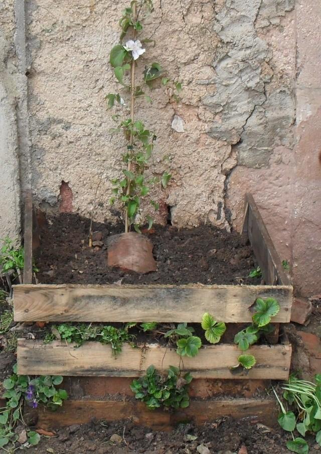 plantation d'une clématite - Page 2 Sam_3813
