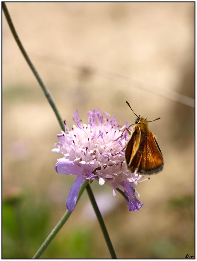 Vos plus belles photos du mois de juin 2010 P6126010