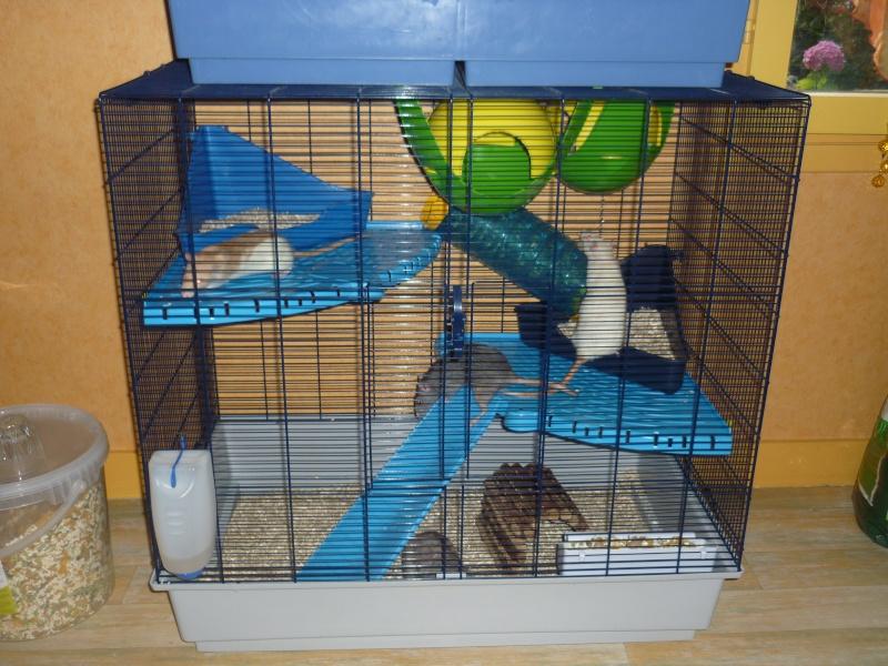 [RECHERCHE] cage freddy 2max P1230610