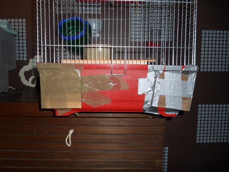Vend divers cages et accesoires !!  Sam_3811