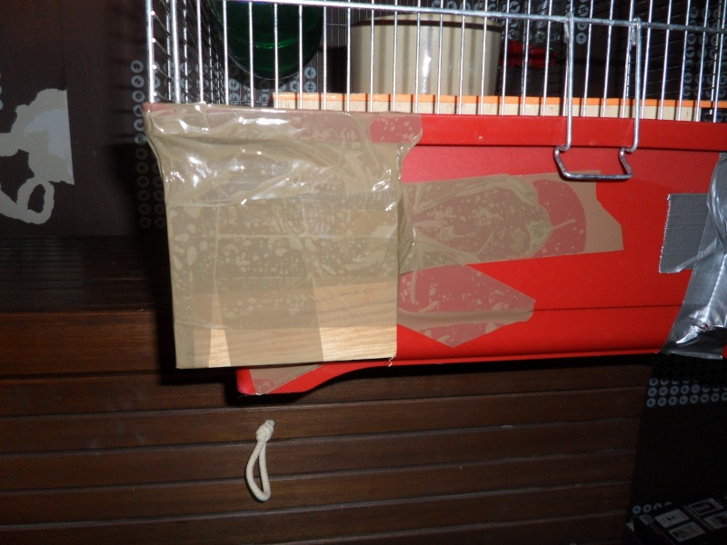 Vend divers cages et accesoires !!  Sam_3812
