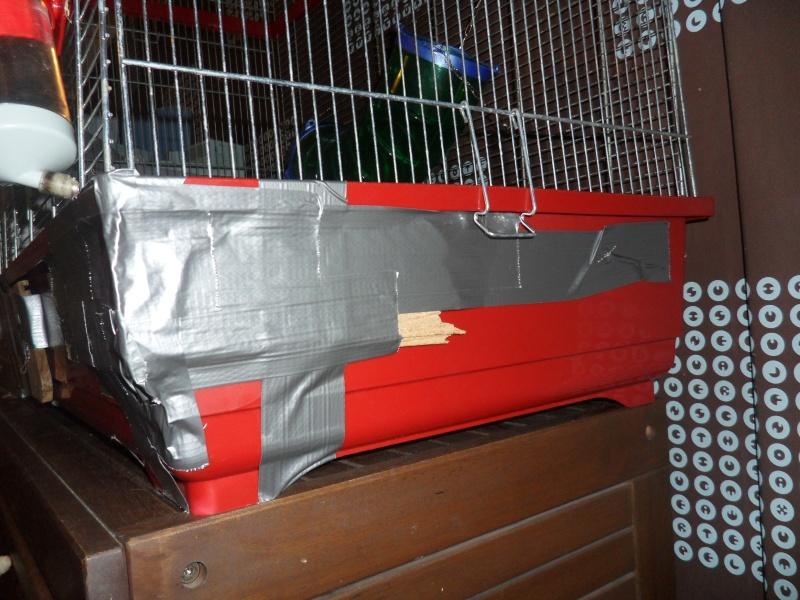Vend divers cages et accesoires !!  Sam_3816
