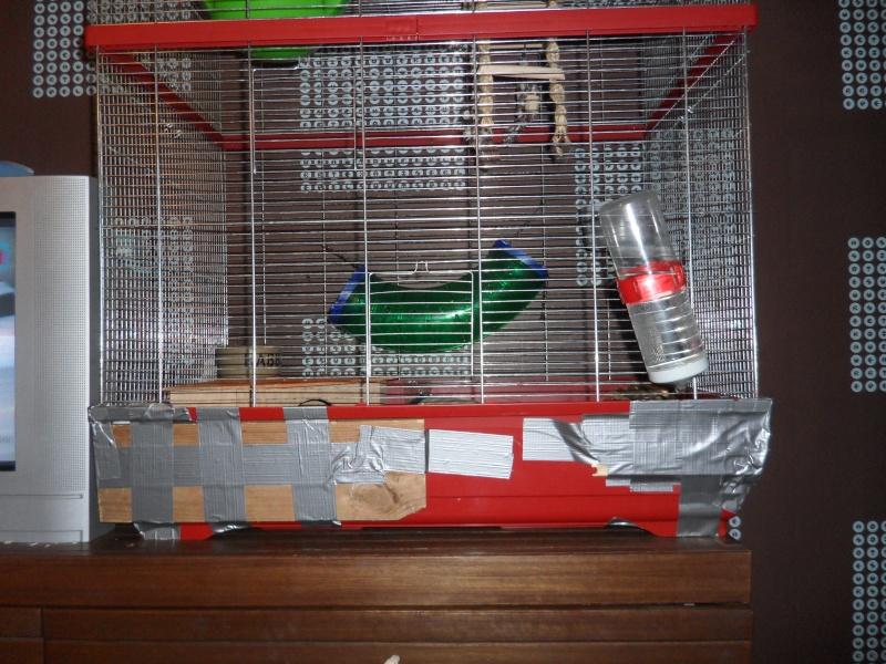Vend divers cages et accesoires !!  Sam_3817
