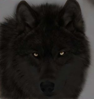 *{{SpiritPack vs. DeathPack}}* -A Wolf RP Black_10