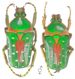 créer un forum : Entomo-coléos - Portail Stepha10