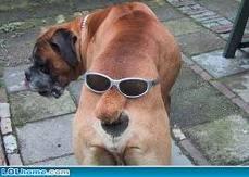 funny dog Untitl10