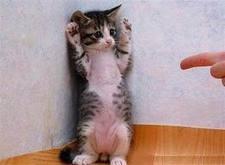 funny cat Untitl12