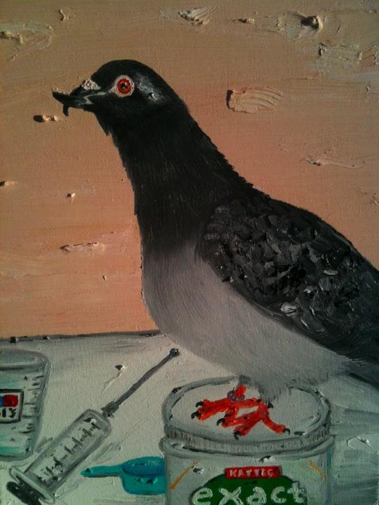 Taylor, my special beak pigeon :) Taylor14