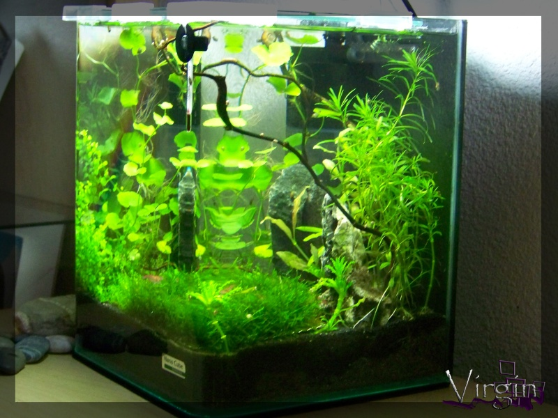 ID2Cube 10L nano Virgin Matevir 1310