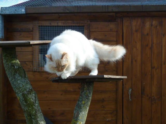 site pour enclos chats Enclos10