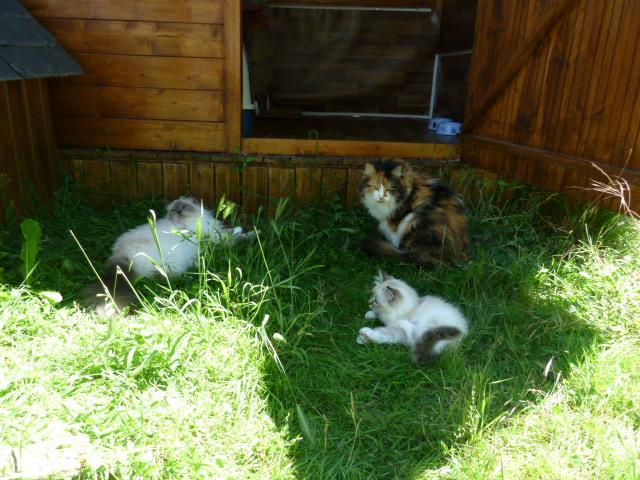site pour enclos chats Enclos11