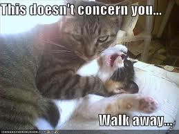 Caturday!! Walkaw10