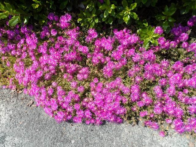 Fleurs de bordure  01211