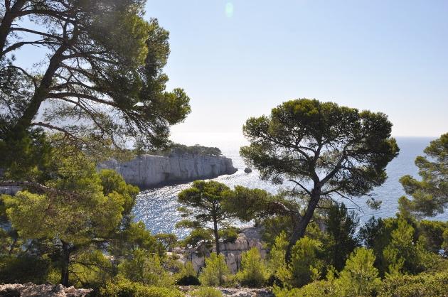 Pinus halepensis - pin d'Alep 2014-012