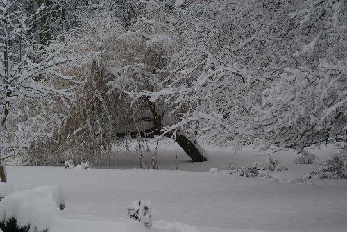 Branches de vie 7_janv10