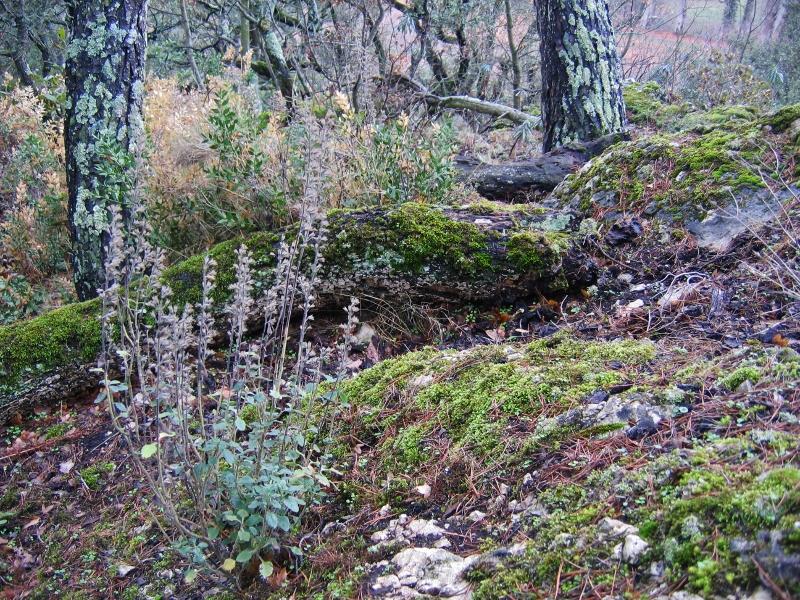 Mousses, lichens et autres fantaisies de l'hiver Arbres13