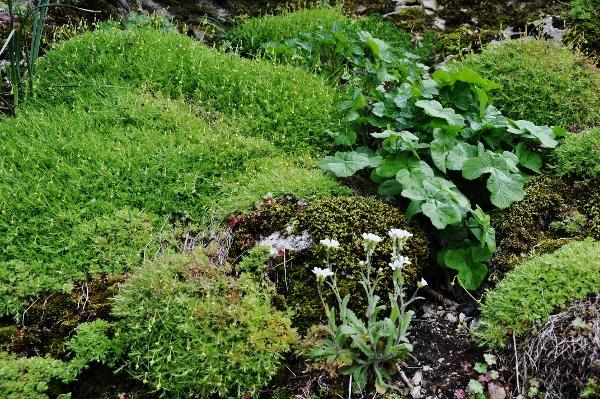 Mousses, lichens et autres fantaisies de l'hiver Concou10