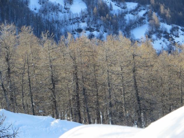 Nos arbres en hiver 2018 Copy_o12