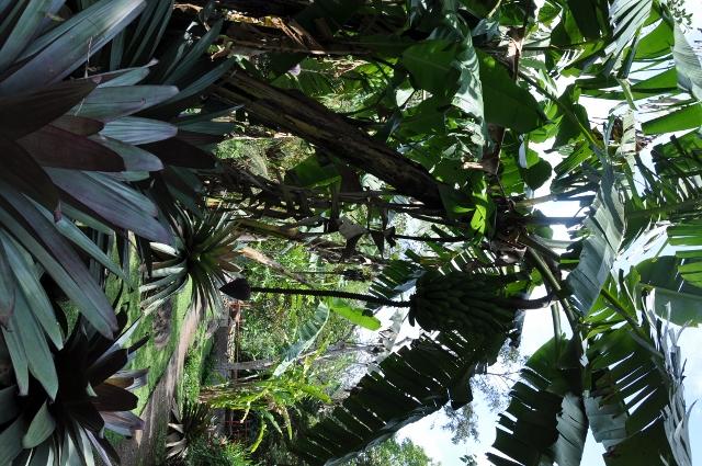 Vriesea imperialis (= Alcantarea imperialis) Costa_26