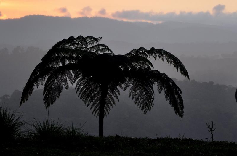 fougères géantes au Costa-Rica Costa_77