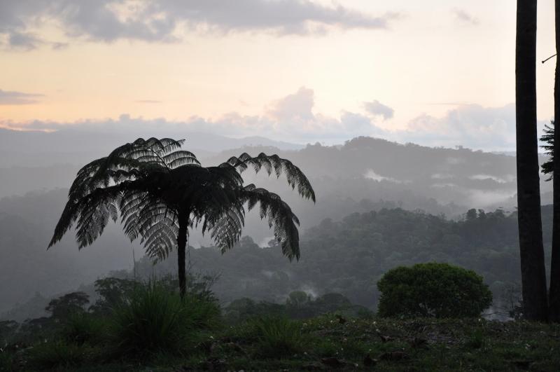 fougères géantes au Costa-Rica - Page 2 Costa_82